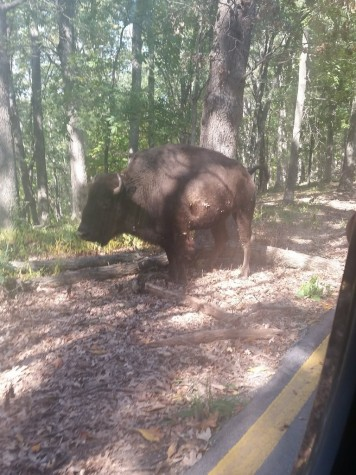 "Lone Elk Park Presents, ""A Wildlife Adventure"" From Inside A Car"