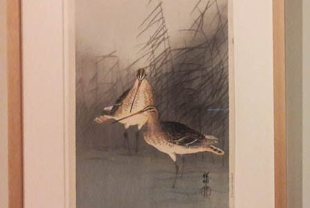 Bartailed Godwits, 1930s