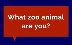 Quiz: What Zoo Animal Are You?