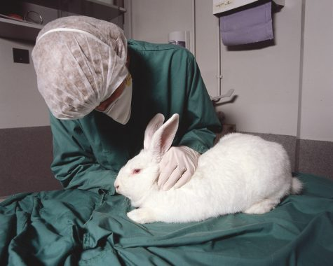 A rabbit in a research room for animal testing. Used under Creative Commons Public License. Photo by Understanding Animal Research.